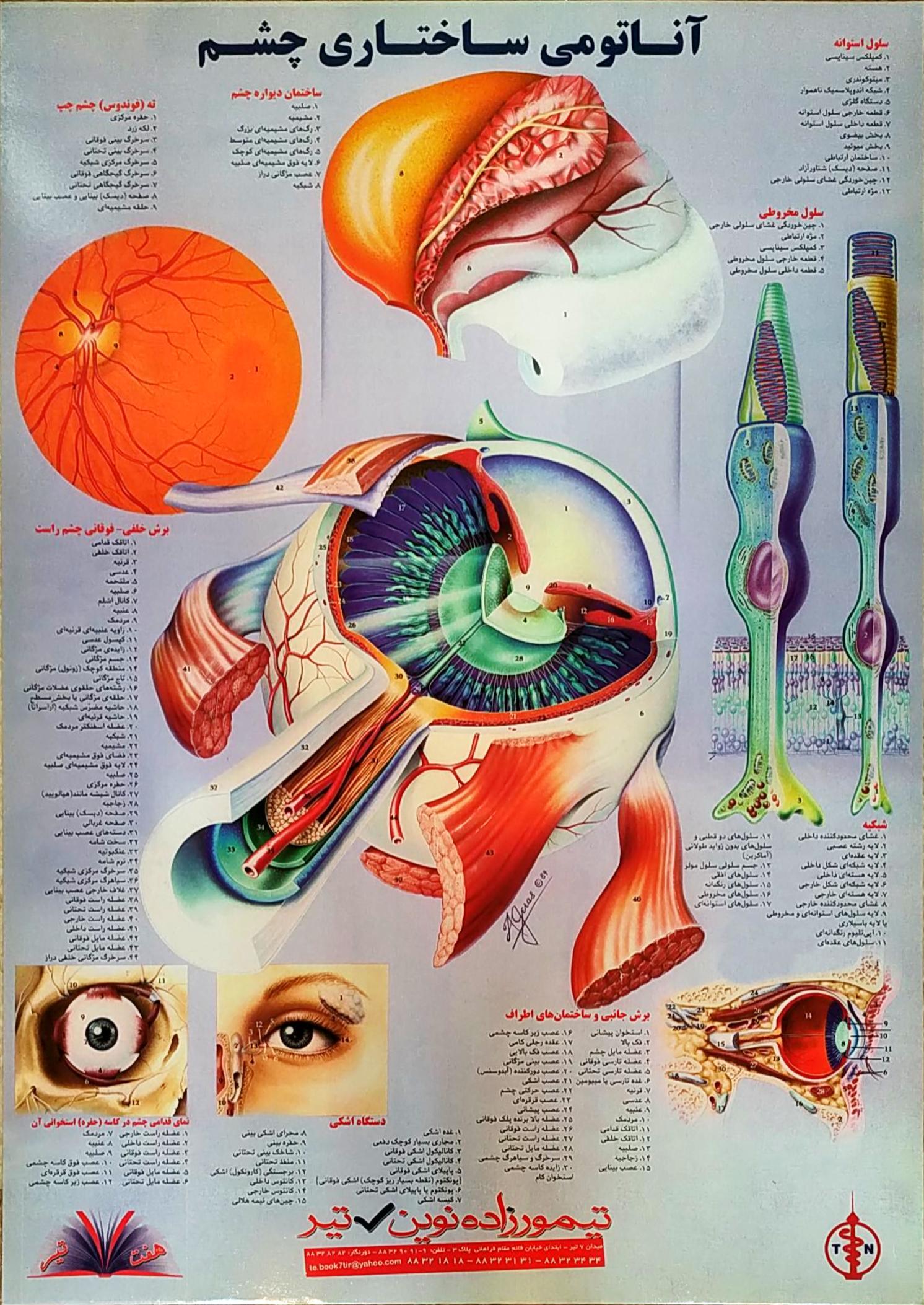 پوستر آناتومی ساختاری چشم