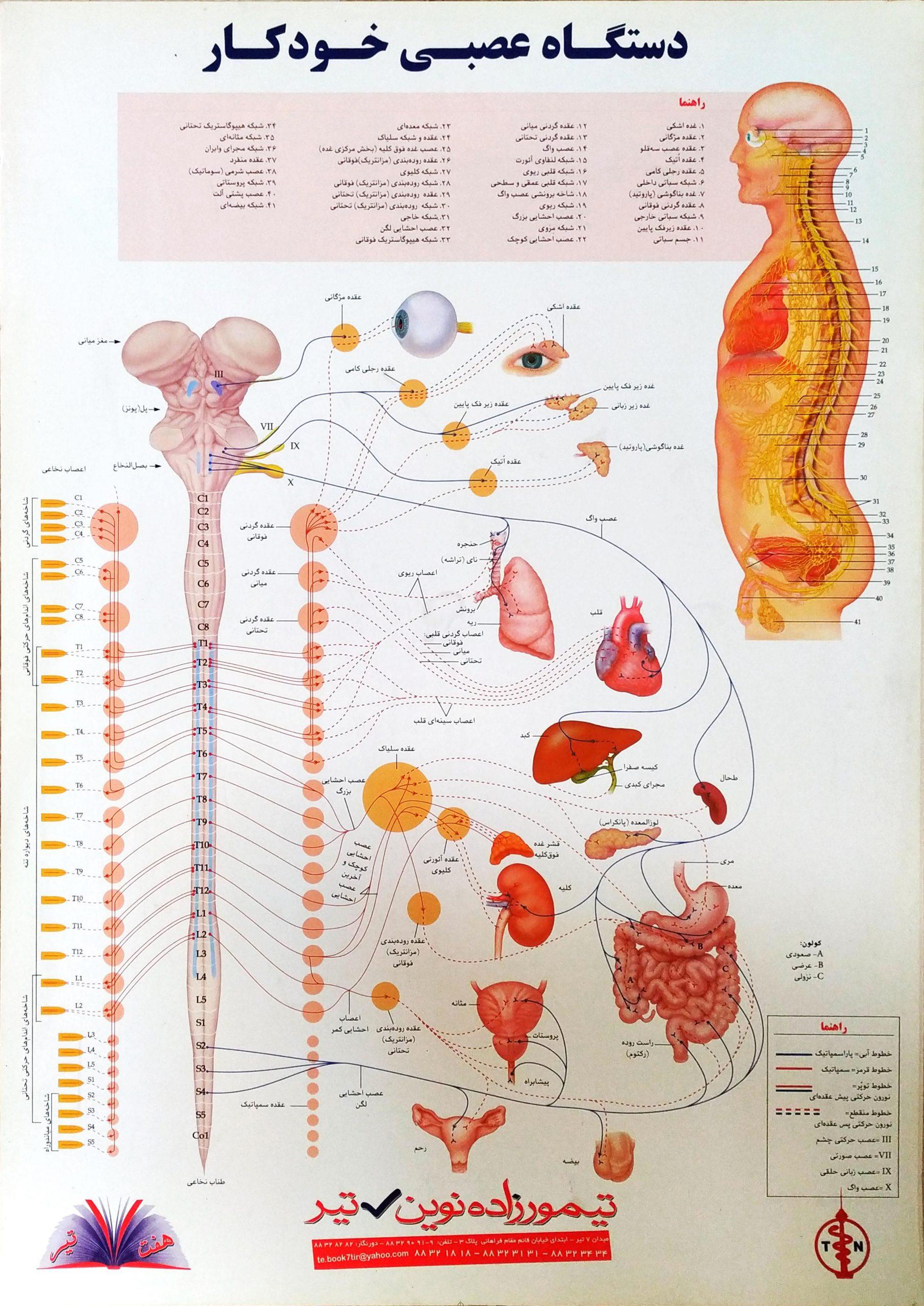 پوستر دستگاه عصبی خودکار