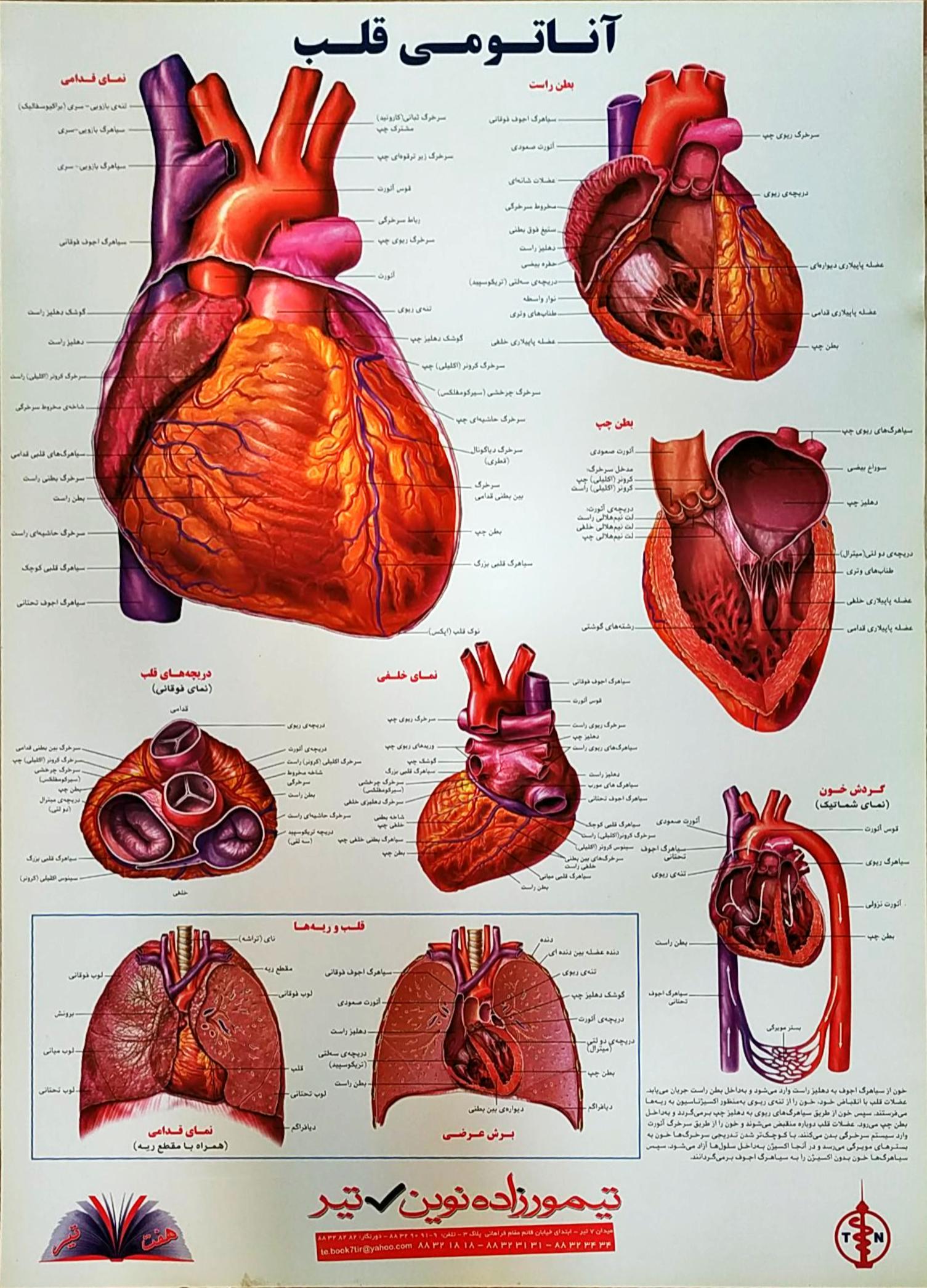 پوستر قلب