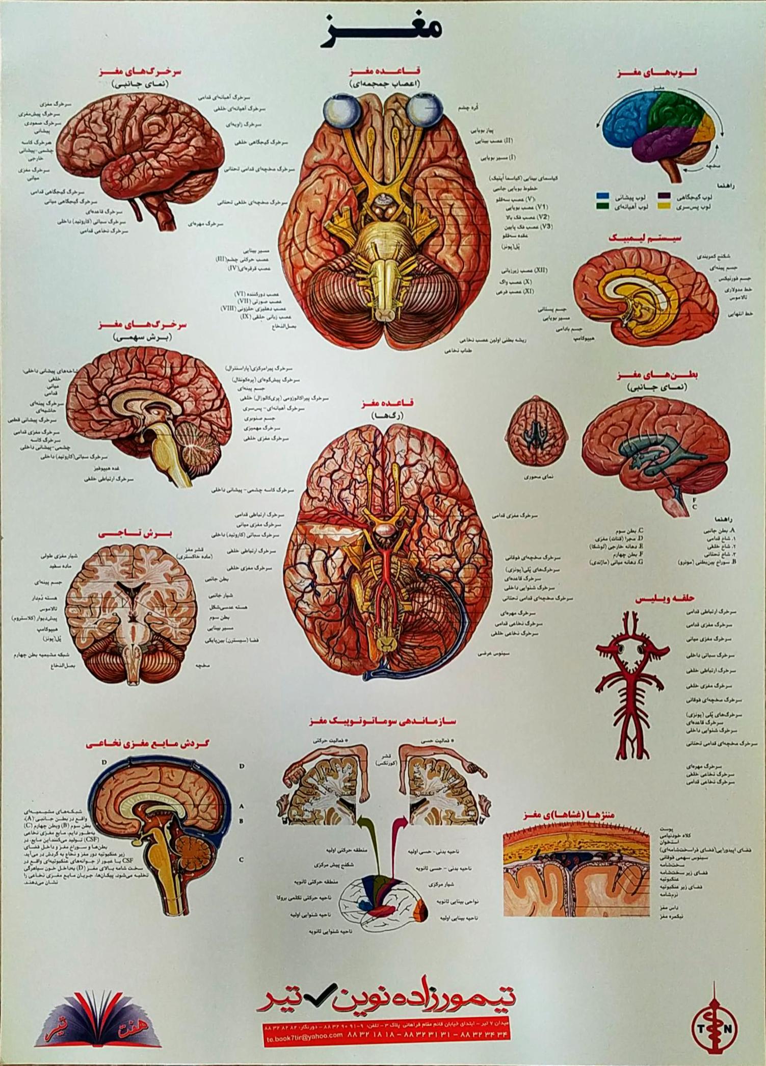 پوستر مغز
